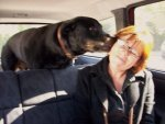 Mensen en honden, roedelgedrag
